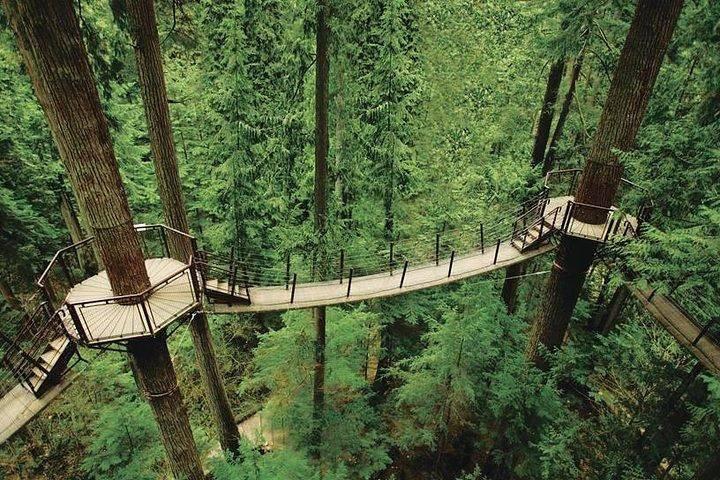 Capilano Suspension bridge  ,Vancouver day tours Globalduniya