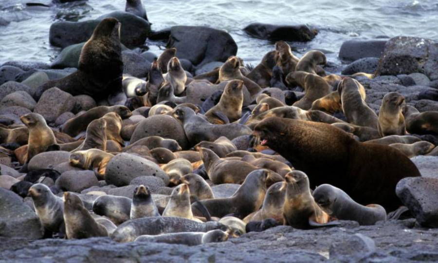 Seal colony Vancouver Cruise Marine wildlife Adventure @ Globalduniya